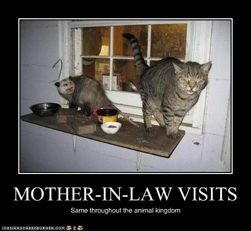 uh43048,1268564749,funny-pictures-cat-has-a-visitor