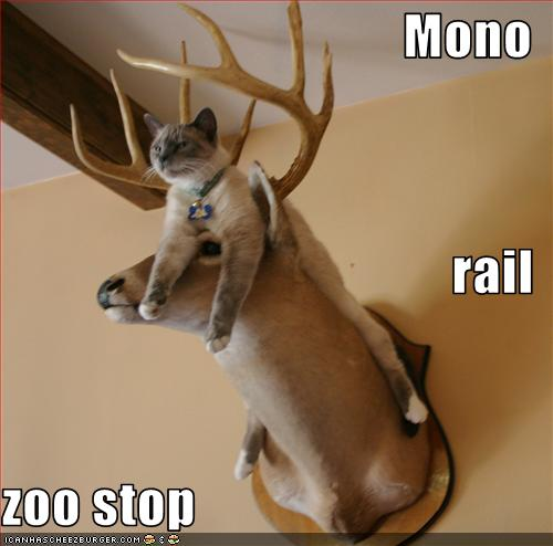uh43048,1268564839,funny-pictures-monorail-cat-stops-at-zoo