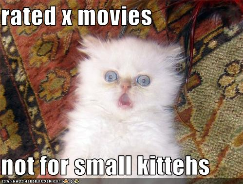 uh43048,1268564864,funny-pictures-kitten-does-not-like-movie