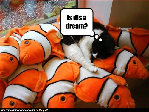 uh43048,1268564891,funny-pictures-cat-has-many-fishes