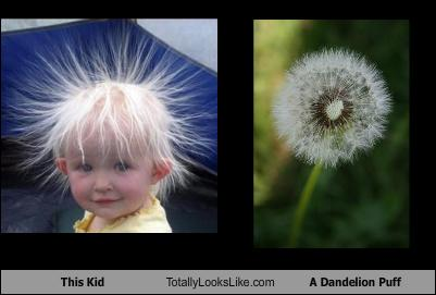 uh43048,1269419957,this-kid-totally-looks-like-a-dandelion-puff
