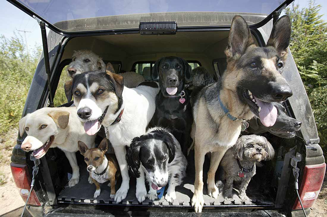 uh43048,1269656879,dogs-in-truck