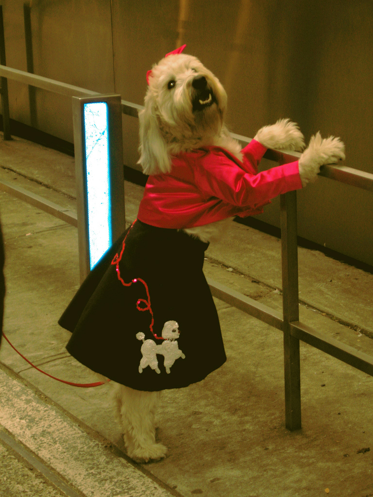 uh43048,1269656918,dog-in-a-poodle-skirt-by-mockstar