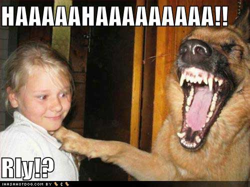 uh43048,1269657231,funny-dog-pictures-laughing-at-little-girl