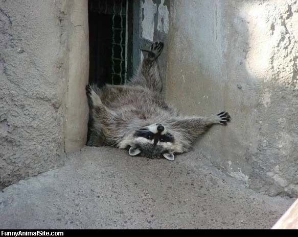 uh43048,1270493927,Racoon Is Pooped