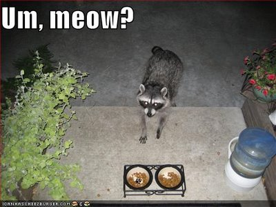 uh43048,1270493951,funny-pictures-raccoon-pretends-to-be-cat