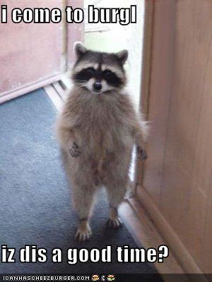 uh43048,1270495256,funny-pictures-raccoon-came-to-burgle