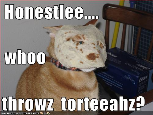 uh43048,1271324559,funny-pictures-cat-has-tortilla-on-face