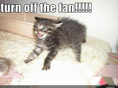 uh43048,1271324610,funny-pictures-kitten-hates-fan