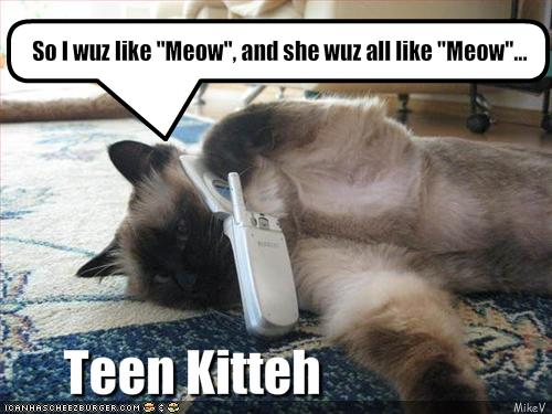 uh43048,1271324739,funny-pictures-cat-is-teenager