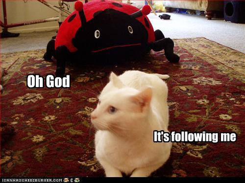 uh43048,1271324758,funny-pictures-cat-is-followed