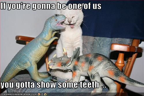 uh43048,1271324819,funny-pictures-kitten-will-be-dinosaur