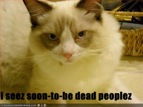 uh43048,1271324856,funny-pictures-cat-makes-threats