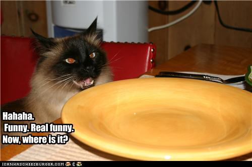 uh43048,1272285145,funny-pictures-cat-has-empty-plate