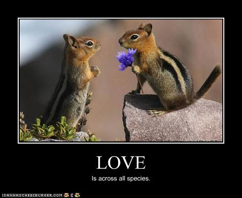 uh43048,1272285238,funny-pictures-chipmunks-have-love