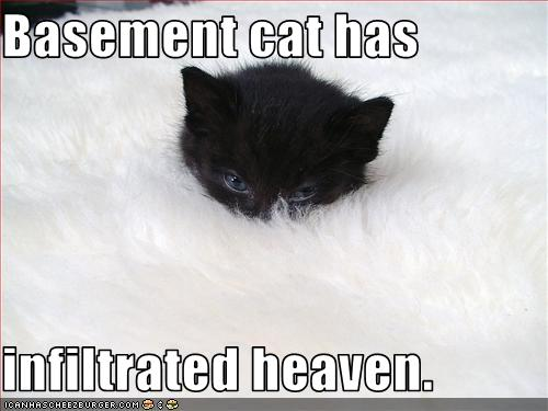 uh43048,1272285295,funny-pictures-basement-cat-is-in-heaven