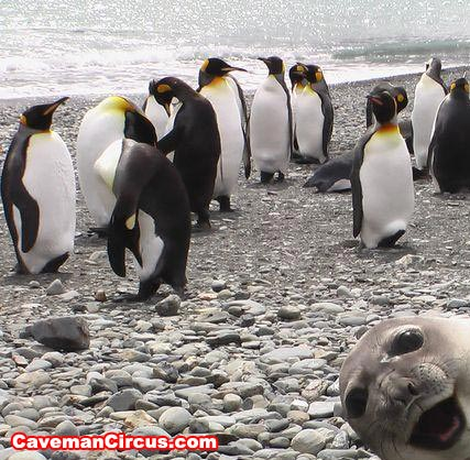 uh43048,1272560992,10 greatest animal photobombs of all time 10