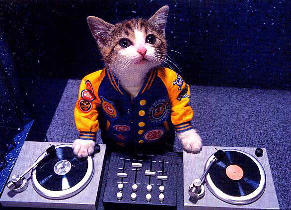 uh43048,1272591486,Cat DJ
