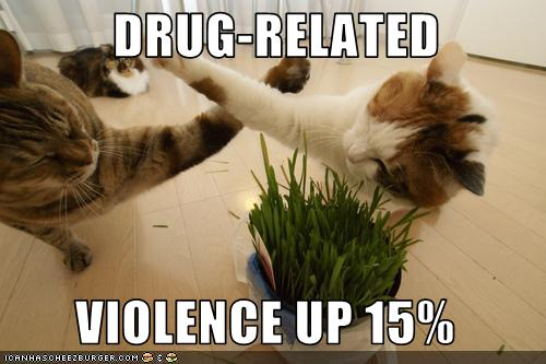 uh43048,1272591543,funny-pictures-cats-have-drug-related-violence