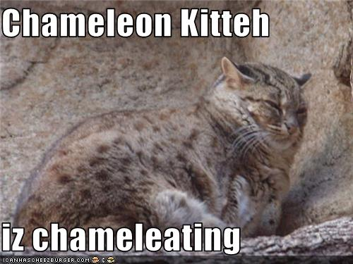uh43048,1272972719,funny-pictures-cat-is-chameleon
