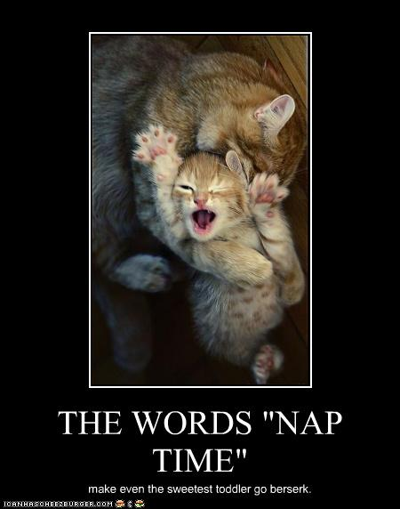 uh43048,1272972790,funny-pictures-kitten-has-naptime