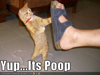 uh43048,1273224053,funny-pictures-cat-looks-at-shoe