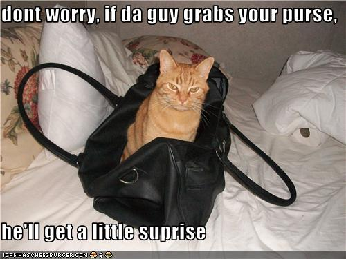 uh43048,1273224065,funny-pictures-cat-is-in-purse