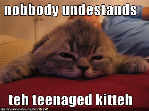 uh43048,1273224144,funny-pictures-kitten-is-misunderstood