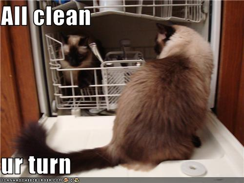 uh43048,1273224152,funny-pictures-cat-cleaned-dishes