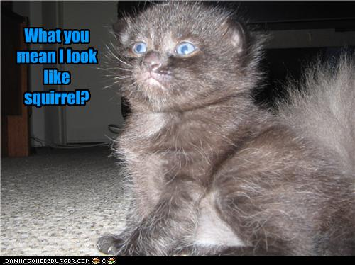 uh43048,1273224189,funny-pictures-kitten-looks-like-squirrel