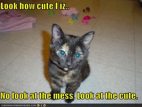 uh43048,1273224210,funny-pictures-kitten-is-cute
