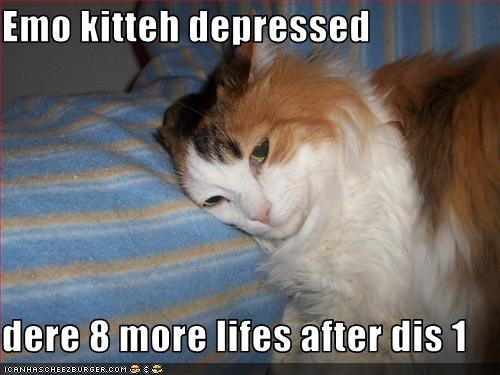 uh43048,1273474869,funny-pictures-cat-is-depressed