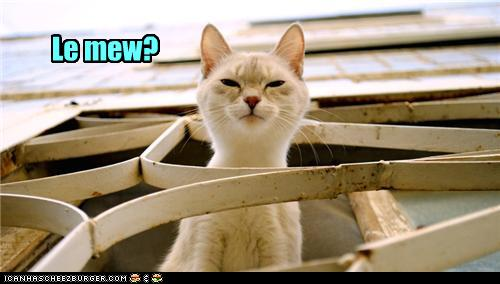 uh43048,1273474896,funny-pictures-french-cat-meows