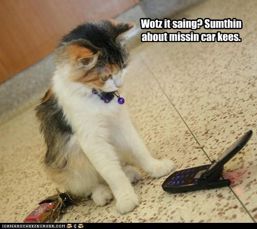 uh43048,1273474914,funny-pictures-cat-talks-on-phone