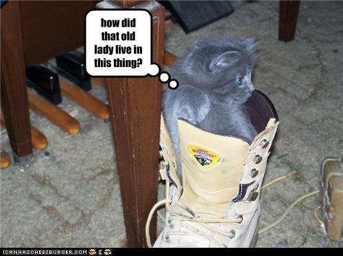 uh43048,1274276601,funny-pictures-kitten-is-in-shoe