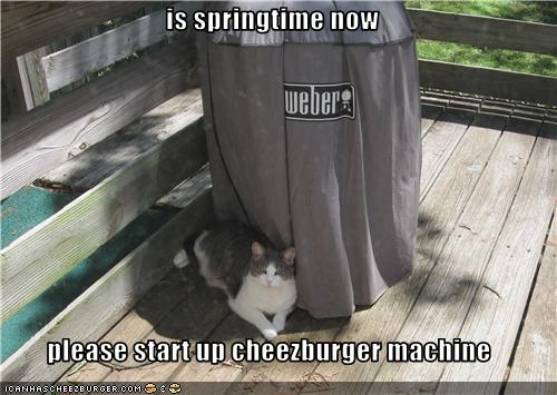 uh43048,1274276862,funny-pictures-cat-asks-that-you-start-machine