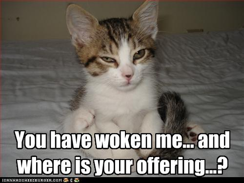 uh43048,1274276871,funny-pictures-cat-wants-offering