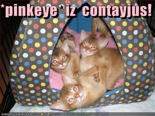 uh43048,1274276956,funny-pictures-kittens-have-pink-eye