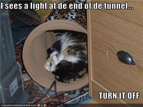 uh43048,1274452637,funny-pictures-cat-saw-light