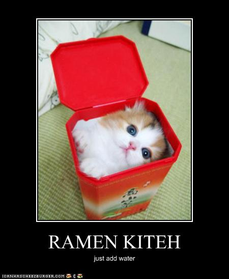 uh43048,1274452713,funny-pictures-cat-is-ramen