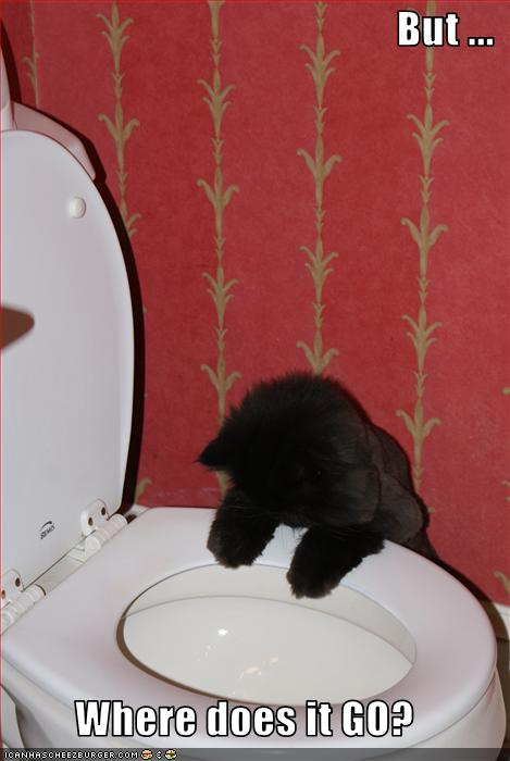 uh43048,1274786893,funny-pictures-cat-looks-at-toilet