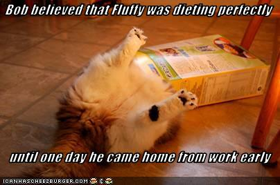 uh43048,1274946381,funny-pictures-cat-is-not-dieting