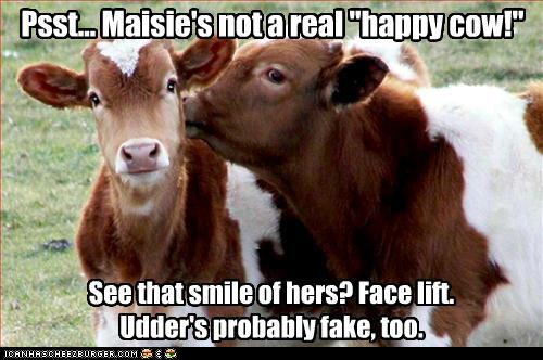 uh43048,1274946395,funny-pictures-cow-is-not-happy