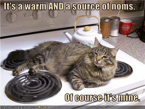uh43048,1274946413,funny-pictures-cat-claims-stove