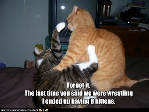 uh43048,1275217842,funny-pictures-cat-hates-wrestling