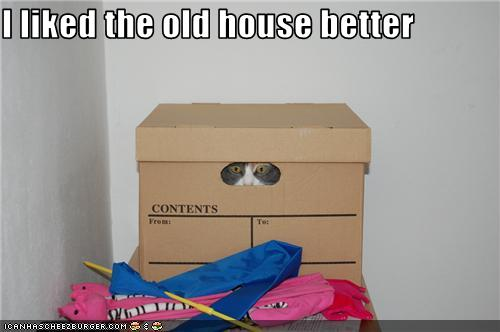 uh43048,1275217858,funny-pictures-cat-hates-new-house