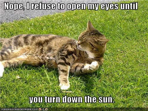 uh43048,1275218559,funny-pictures-cat-refuses-to-open-eyes