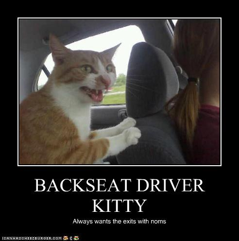 uh43048,1275218589,funny-pictures-cat-is-backseat-driver