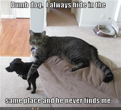 uh43048,1275977018,funny-pictures-cat-hides-from-dog