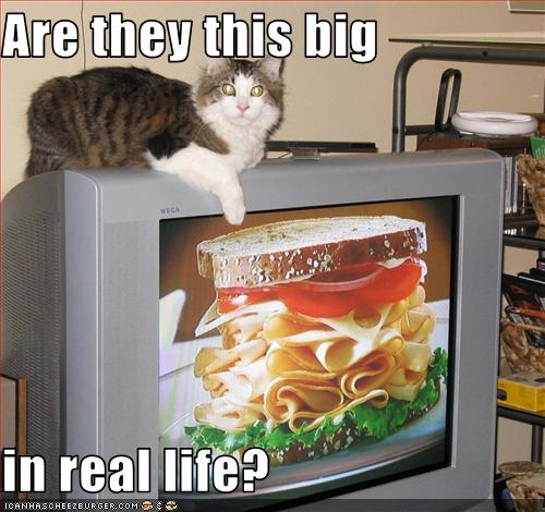 uh43048,1275977074,funny-pictures-cat-watches-tv